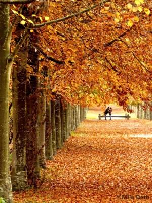 1-amoureux-d-automne